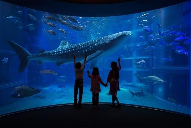 海遊館の吹き抜けの大水槽,大阪,水族館,海遊館