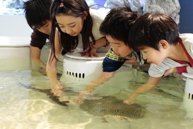 新体感エリアでサメ、エイにタッチ,大阪,水族館,海遊館