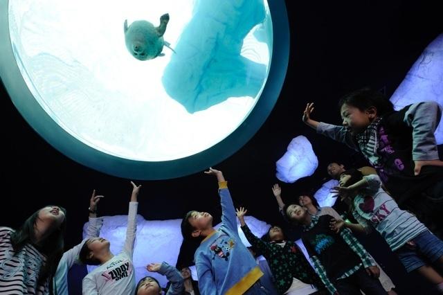 ワモンアザラシを下から見られる天井水槽,大阪,水族館,海遊館