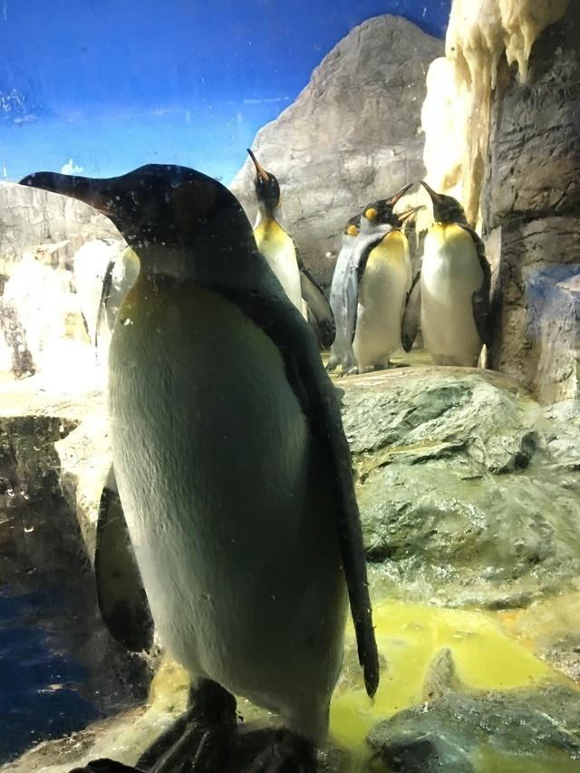 ペンギンの群れ,大阪,水族館,海遊館