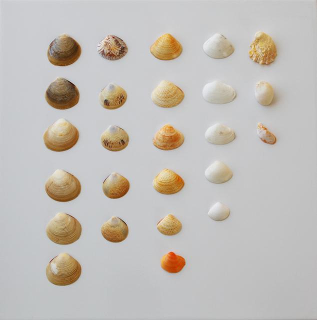貝殻,自由研究,簡単,
