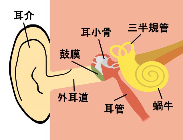 耳の中の構造,急性中耳炎,子供,