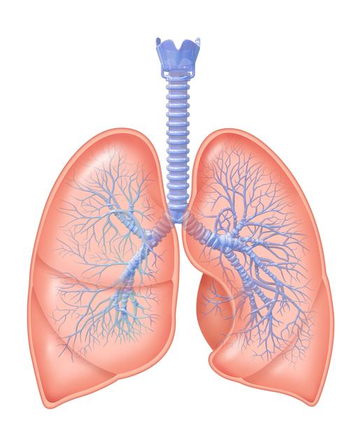 呼吸器,細気管支炎,赤ちゃん,