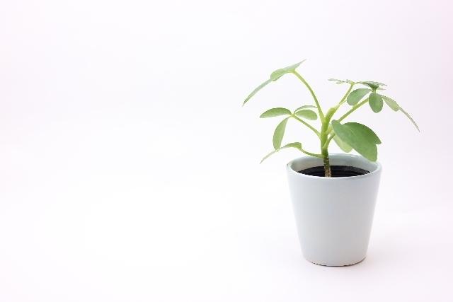 鉢植えの写真,産後,8ヶ月,