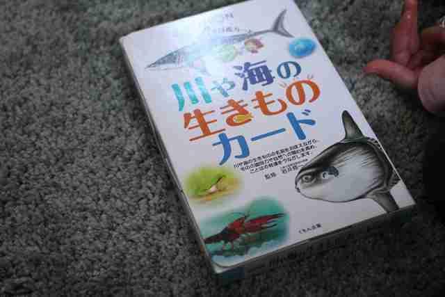 くもん 知育カード「川や海の生きものカード」,くもん,カード,