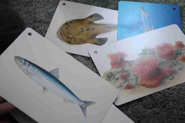 くもん 知育カード「川や海の生きものカード」の内容,くもん,カード,