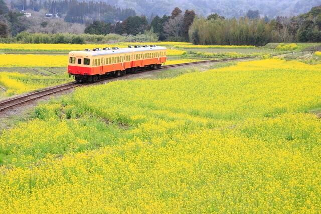 *写真はイメージです 小湊鉄道と菜の花,千葉,菜の花,名所