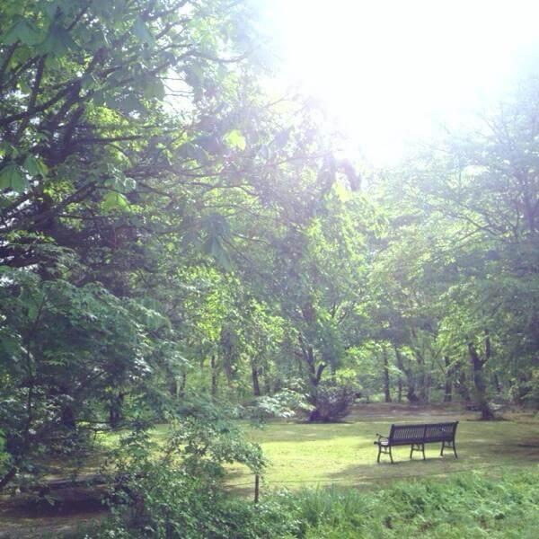 やわらが池,但馬高原植物園,
