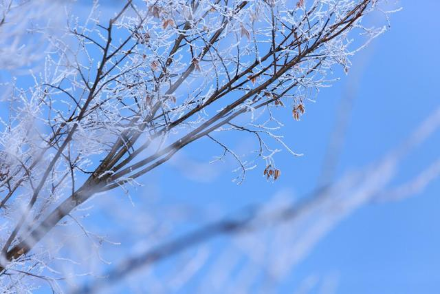 凍った枝,子供用,腹巻,