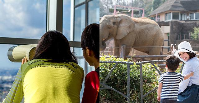 展望台から覗く親子と動物園でゾウを見る親子,