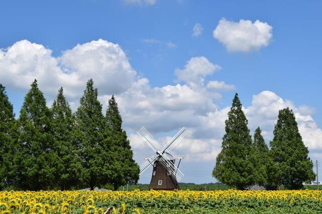 ひまわり畑と風車,関東,ひまわり,名所