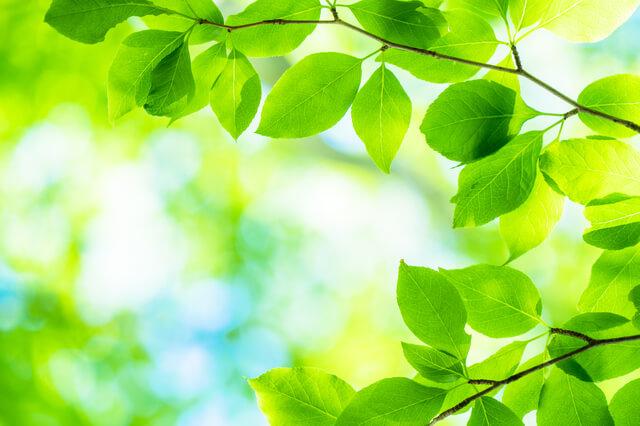 新緑,コツ,絵本,読み方