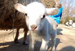 狭山市立智光山公園こども動物園,埼玉,子供,動物公園