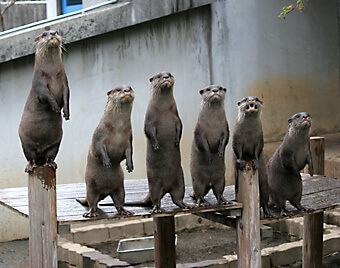 市川市動植物園のミーアキャット,千葉県,動物園,動物と触れ合える