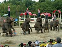 市原ぞうの国ぞうさんショー,千葉県,動物園,動物と触れ合える