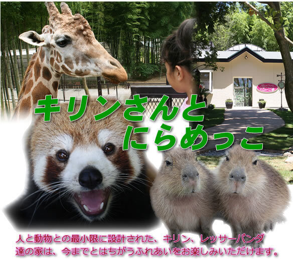 サユリワールド,千葉県,動物園,動物と触れ合える
