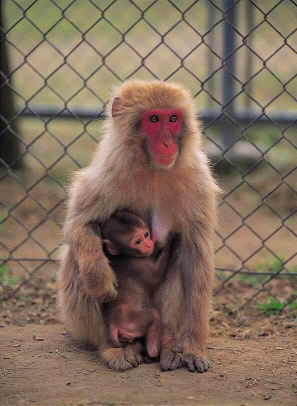 高宕山自然動物園,千葉県,動物園,動物と触れ合える