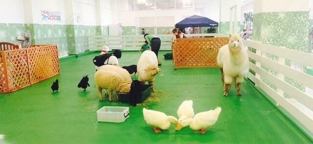 モフアニマルワールド,千葉県,動物園,動物と触れ合える