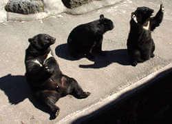 奥飛騨 クマ牧場,動物園,東海,触れ合い