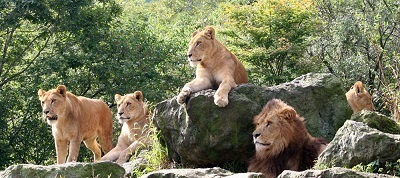 ライオン,静岡県,動物園,かわいい