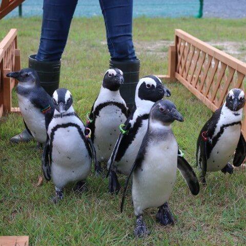 掛川花鳥園,静岡県,動物園,かわいい