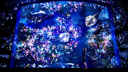 えのすい×チームラボ「ナイトワンダーアクアリウム2015」,東京,夜,水族館