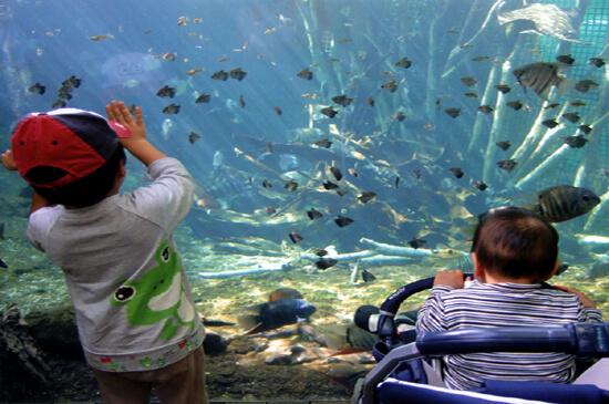 栃木県なかがわ水族館,なでなで,生き物,ふれあい
