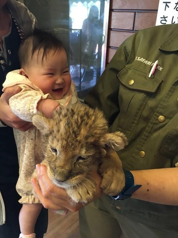 赤ちゃんライオンと赤ちゃん,富士,サファリパーク,静岡