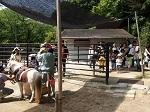 東公園動物園のウマ舎,愛知,動物園,ふれあい