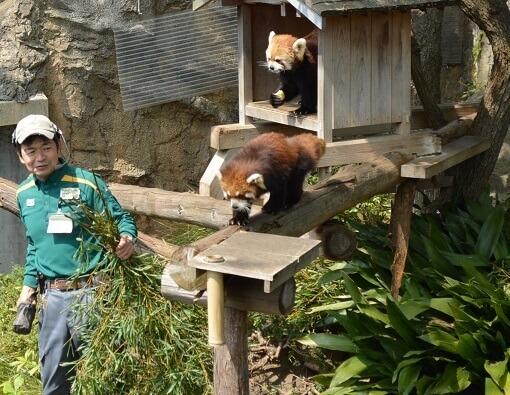 横浜市立 野毛山動物園,神奈川県,動物園,無料