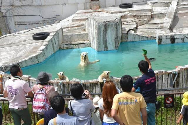 札幌市円山動物園,期間限定,親子,見学