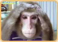 東筑波ユートピア猿,茨城,動物園,おすすめ