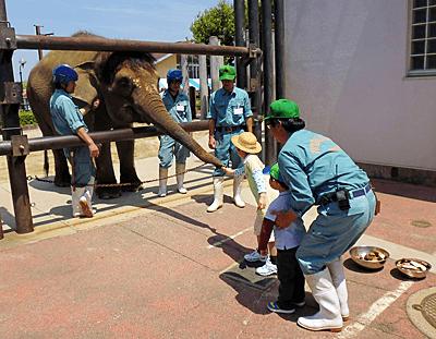 福山市立動物園ぞうのえさやり,広島県,動物園,おすすめ