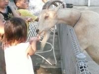 ふれあいコーナー,神奈川,平塚,動物園