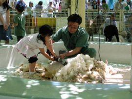 羊の毛狩り,江戸川区自然動物園,無料,触れ合い体験