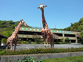 駐車場の画像,横浜,金沢動物園,人気