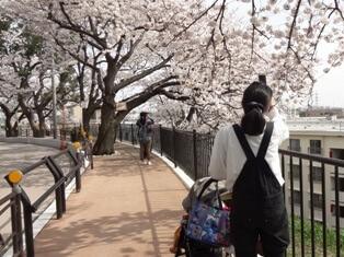 夢見ヶ崎公園の桜,夢見ケ崎動物公園,人気,レッサーパンダ
