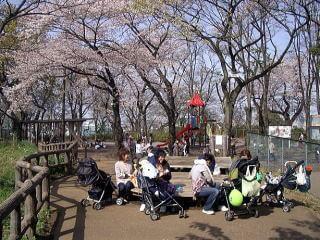 夢見ケ崎動物公園の富士見デッキ,夢見ケ崎動物公園,人気,レッサーパンダ