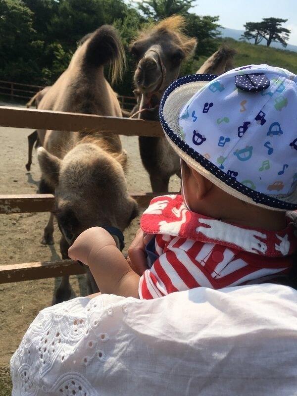 ラクダを見る赤ちゃん,那須,どうぶつ王国,口コミ