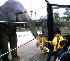 ゾウへのえさやり体験,とくしま,動物園,