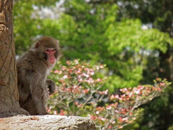 市川市動植物園のニホンザル,市川市動植物園,カワウソ,