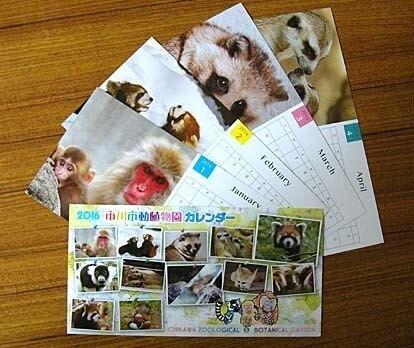 市川市動植物園のオリジナルカレンダー,市川市動植物園,カワウソ,