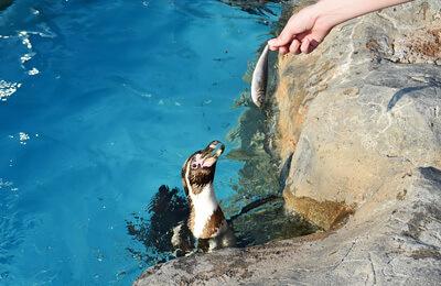 ペンギンの餌やり体験,東武動物公園,遊園地,