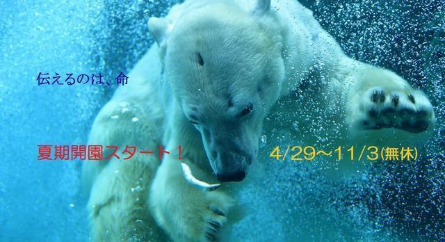 北海道旭山動物,北海道,動物園,