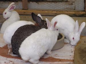 ウサギとのふれあい,静岡,動物園,
