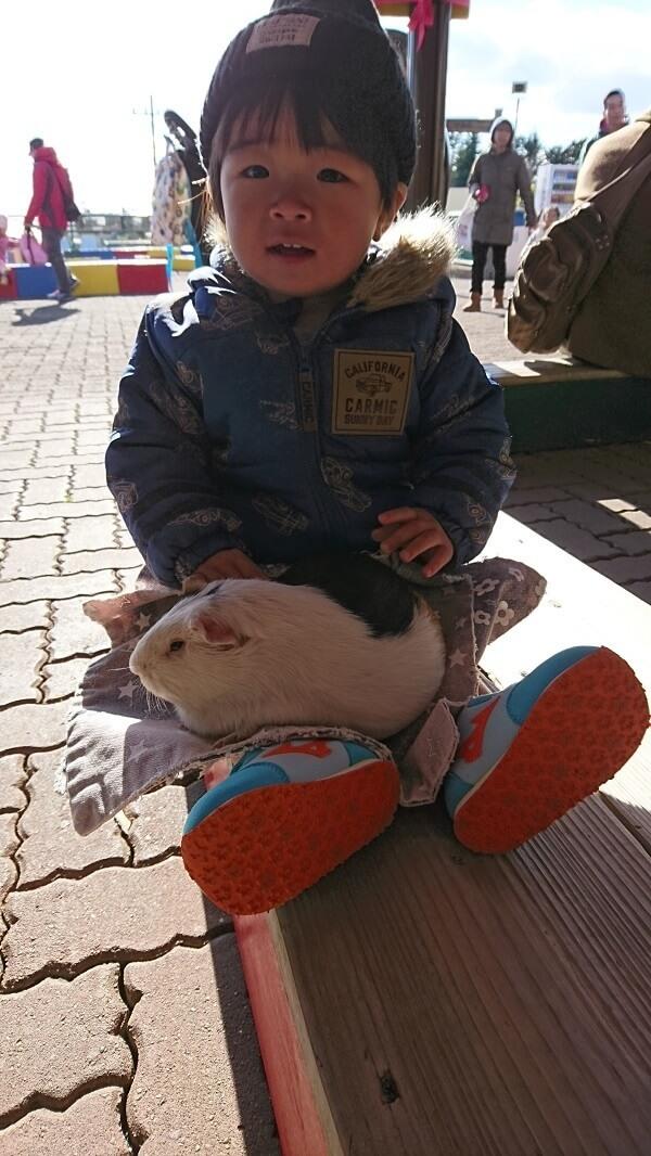 テンジクネズミを抱っこする幼児,茨城,動物園,