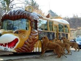 エサやり体験バス,群馬サファリパーク,割引,