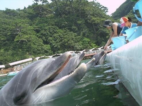 下田海中水族館のいるか,東海,おすすめ,水族館