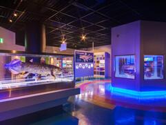 沼津港深海水族館シーラカンス・ミュージアム,東海,おすすめ,水族館