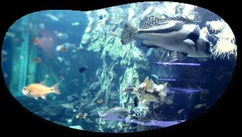 あわしまマリンパーク,東海,おすすめ,水族館